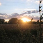 Sonnenuntergang in Forst
