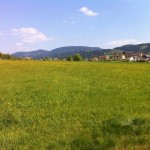Meine Landewiese ;-)